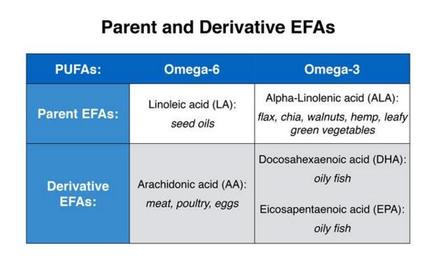 Multigenerational Vegetarians   Cancer and Heart Disease