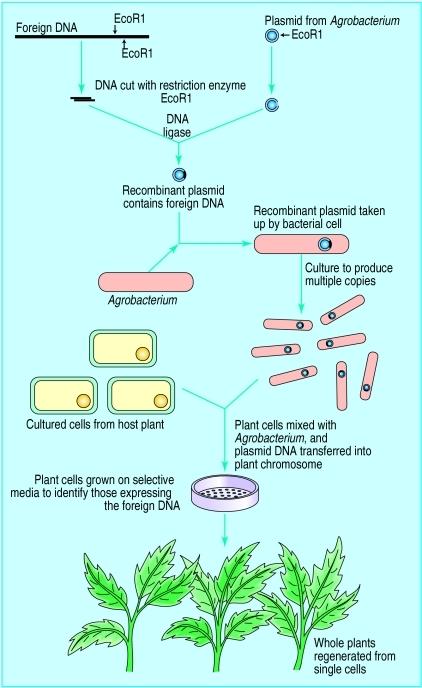 GMO Fig 2   The Paleo Diet